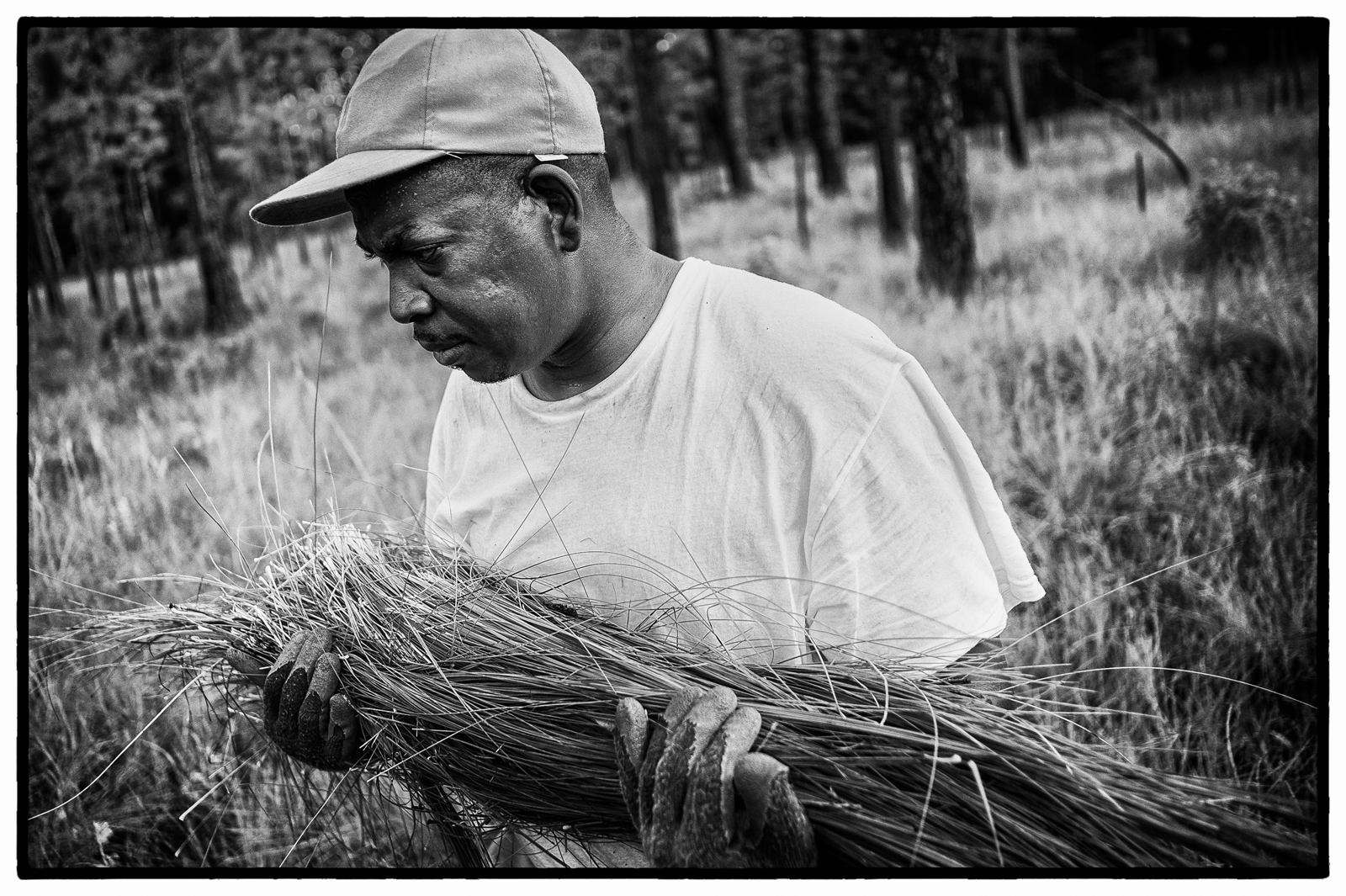 Darryl Stoneworth harvests sweetgrass on property owned by the Okeetee Hunt Club near Hardeeville, SC.